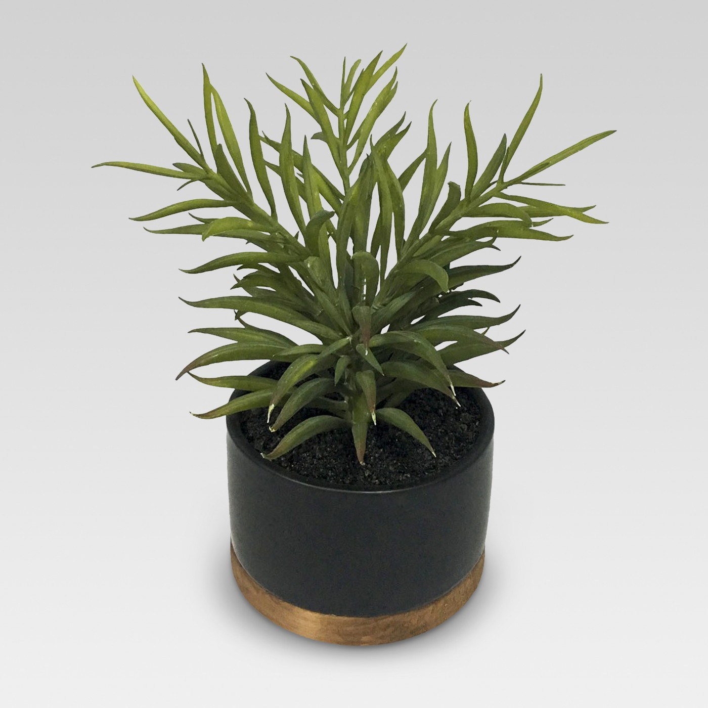Plant in Black Pot Medium