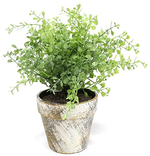 Green Boxwood in Faux Stone Pot